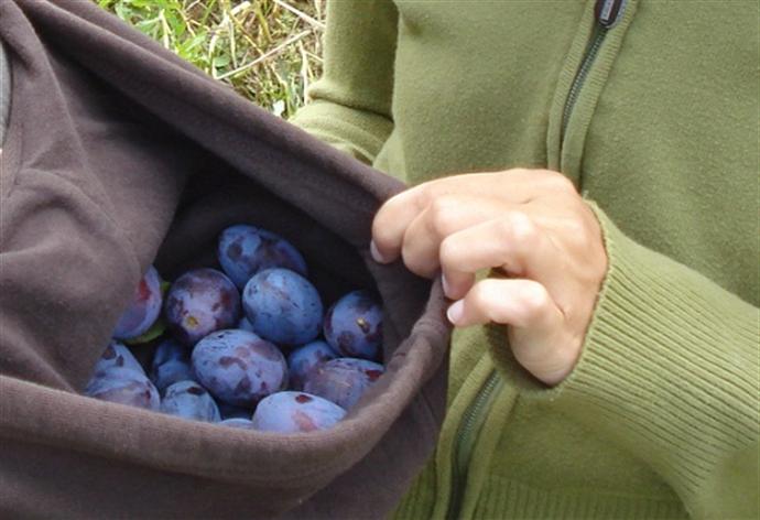 Prajitura rasturanta cu prune si nostalgie 4